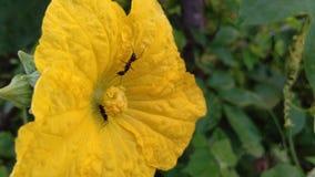 Flower yellow ants nectar nature stock photo