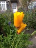 Flower. Yellow beautiful flower Stock Photo