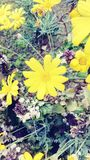 Flower. Yellow beutyful park in nature Stock Photo