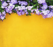 Flower and yellow cement wall Royalty Free Stock Photo