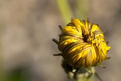 Flower, Yellow, Close Up, Petal stock images