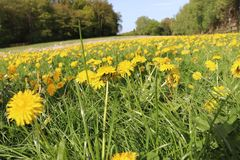 Flower, Yellow, Field, Meadow stock image