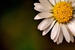 Flower, Yellow, Flora, Macro Photography stock photography