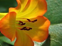 Flower, Yellow, Flora, Orange royalty free stock photos