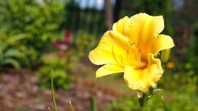 Flower, Yellow, Flora, Plant stock photos
