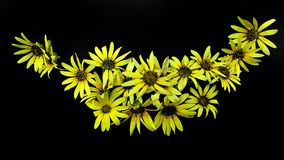 Flower, Yellow, Flora, Plant