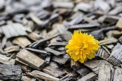 Flower, Yellow, Flora, Spring Royalty Free Stock Images