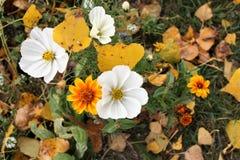 Flower, Yellow, Flora, Spring royalty free stock photos