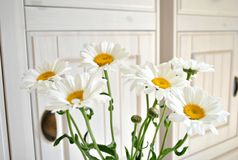 Flower, Yellow, Flowering Plant, Cut Flowers Royalty Free Stock Image