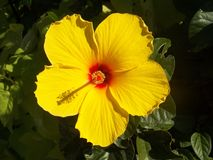 Flower, Yellow, Flowering Plant, Plant royalty free stock photo