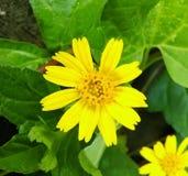 Flower. Yellow flower in the garden Stock Images