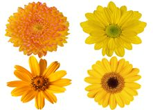 Flower of a yellow gerbera on isolated white background. Flower of a yellow gerbera on the white isolated background Royalty Free Stock Photos