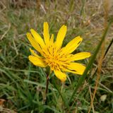Flower. Yellow flower in grass. Summer photo Stock Photography