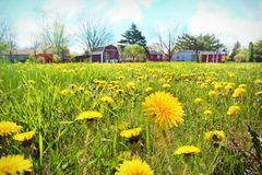 Flower, Yellow, Meadow, Field royalty free stock photography
