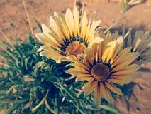 Flower. Yellow flower nature Stock Photo