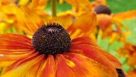 Flower, Yellow, Nectar, Honey Bee stock photography