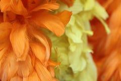 Flower, Yellow, Orange, Petal Royalty Free Stock Images