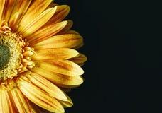 Flower, Yellow, Petal, Bloom Stock Photo