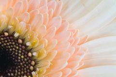 Flower, Yellow, Petal, Close Up stock photography