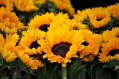 Flower, Yellow, Plant, Annual Plant Stock Photos