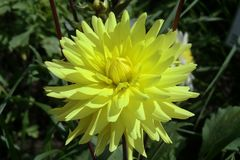Flower, Yellow, Plant, Flowering Plant Royalty Free Stock Photo