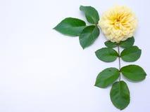 Flower border Stock Images