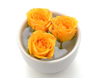 Flower yellow rose with water close up detail. Three roses in a glass of water Royalty Free Stock Images