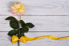 Flower of yellow roses with a ribbon Royalty Free Stock Image