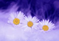 Flower, Yellow, Sky, Purple Stock Images