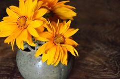 Flower, Yellow, Still Life Photography, Wildflower stock photos