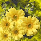 Flower, Yellow, Sunflower, Flowering Plant royalty free stock photos
