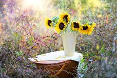 Flower, Yellow, Sunflower, Plant Royalty Free Stock Image