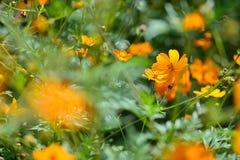 Flower, Yellow, Vegetation, Wildflower Royalty Free Stock Photos