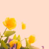 Flower yellow vintage and beautiful Stock Images