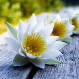 Flower. Yellow-white flowers on a wooden table on a Sunny day. Bokeh Royalty Free Stock Photo