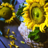 Flower. Yellow-white flowers on a wooden table on a Sunny day. Bokeh Royalty Free Stock Photos