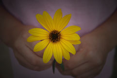 Flower for you Stock Images