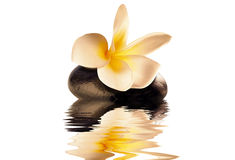 Flower zen. Flower on the stone with water reflection Stock Photography