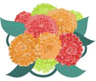 Flower zinnia bouquet Stock Photography