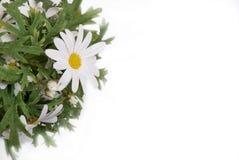 flower3 Zdjęcie Stock