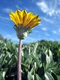 Flower3 sauvage photographie stock libre de droits