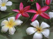 Flowera в курорте Стоковые Изображения RF