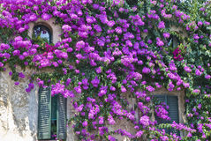 Flowerage Royalty Free Stock Image
