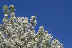 Flowerage Stock Images