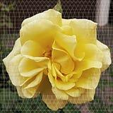 Flowerart Стоковое фото RF