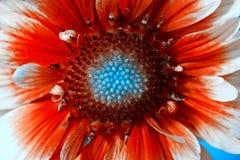 Flowerbackground, gardenflowers 美丽的唯一花特写镜头 水平的夏天开花艺术背景 库存图片
