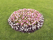 Flowerbed με τα διαφορετικά χρώματα στη μέση του χορτοτάπητα Στοκ Φωτογραφία