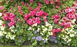 Flowerbed με τα λουλούδια Στοκ Εικόνα
