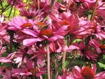 Flowerbed των φωτεινών χρωμάτων Στοκ Εικόνες
