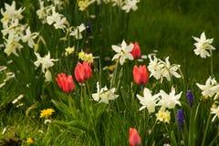 Flowerbed в цветах Вид спереди Стоковая Фотография RF